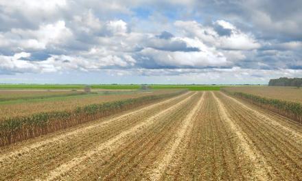 Meghívó – Agriforvalor képzés: a kutatás-fejlesztés a biomasszára épülő gazdaság (bioökonómia) érdekében