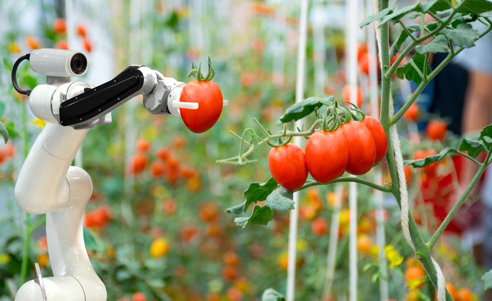 Folyamatosan zajlanak a kutatások a kertészeti robotokkal kapcsolatban