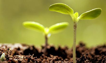 Tavaly a növényvédelmi gondok többsége leküzdhető volt, mi lesz idén?