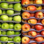 Közel kétszer annyi étkezési alma van a lengyel raktárakban, mint tavaly ilyenkor
