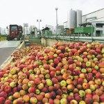 Léüzemekben végzi az étkezési alma