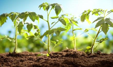 A kertészeti ágazat a magyar mezőgazdaság meghatározó területe