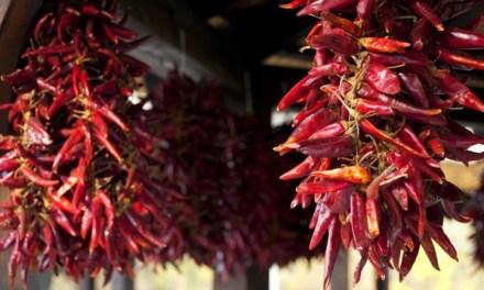 A fűszerpaprika-termelők ismét igényelhetik a csekély összegű támogatást fémzárolt vetőmag vásárlására