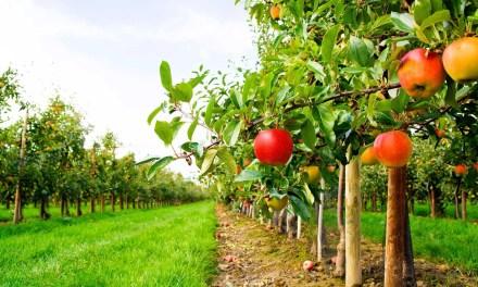 Százmilliárd eurós bioélelmiszer-piac