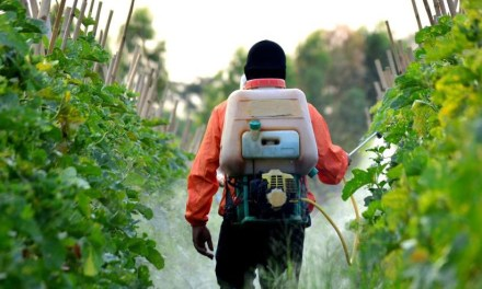 Szerkivonások, szigorodó szabályozás – mi lesz idén a sikeres növényvédelem alapja?
