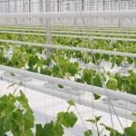 Támogatás igényelhető a fűtött növény- és gombaházakra