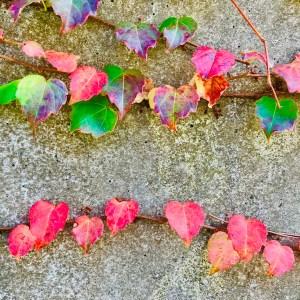 秋 葉っぱ 色