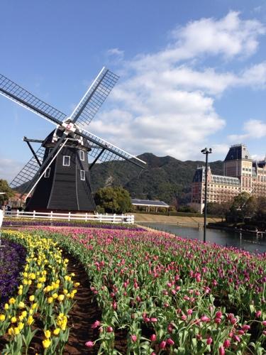 flowersandwindmill.JPG