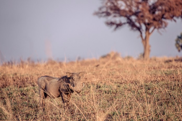 Travel Rwanda_Uganda_small-2228