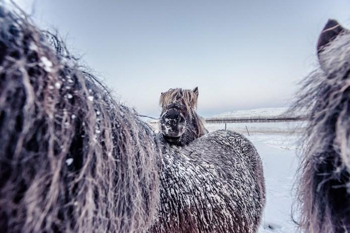 icelandfrumoltphotography2015135