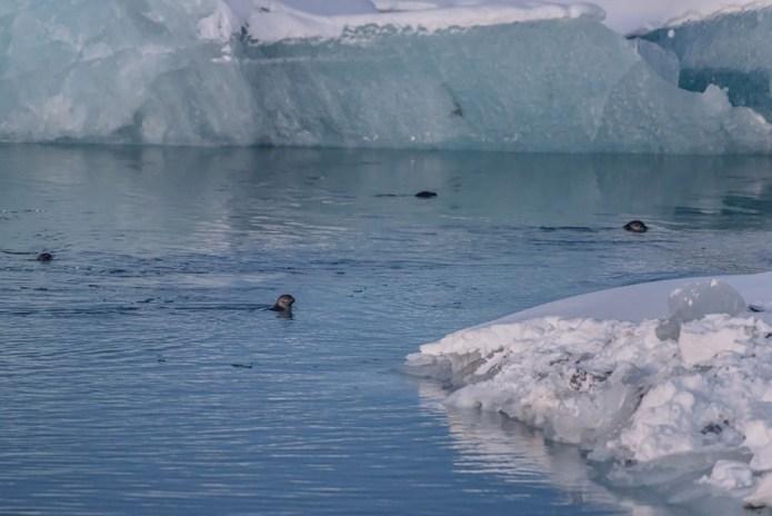 icelandfrumoltphotography2015191