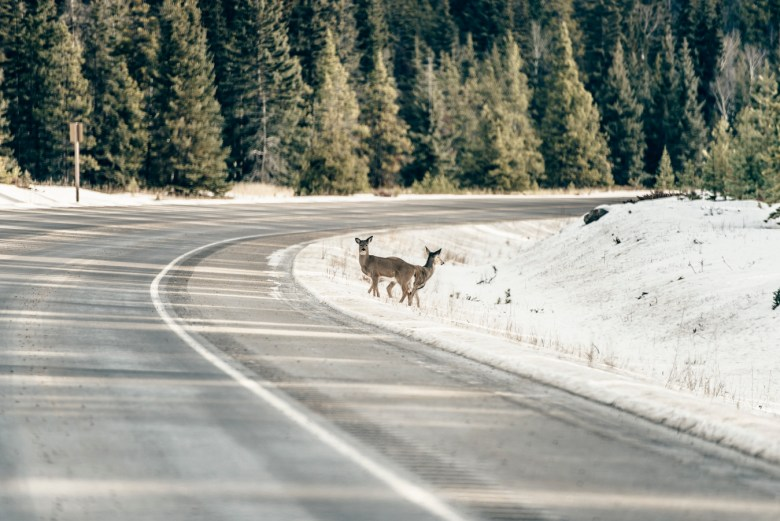 icefields-parkway-christian-frumolt-fotografie_web_small-56
