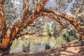 australiennordwestenblogfrumolt2018-103