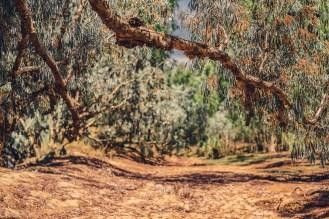 australiennordwestenblogfrumolt2018-104