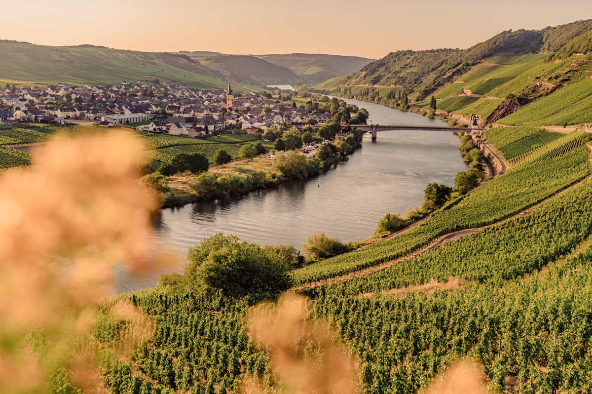 German Wine Tour frumolt photography small size-103
