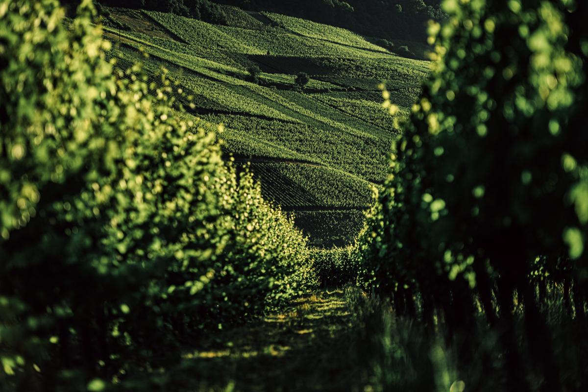 German Wine Tour frumolt photography small size-122
