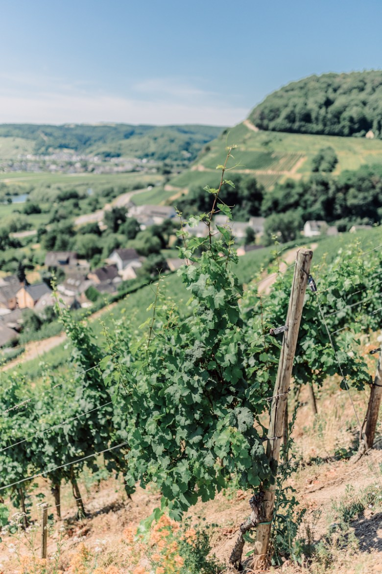 German Wine Tour frumolt photography small size-49