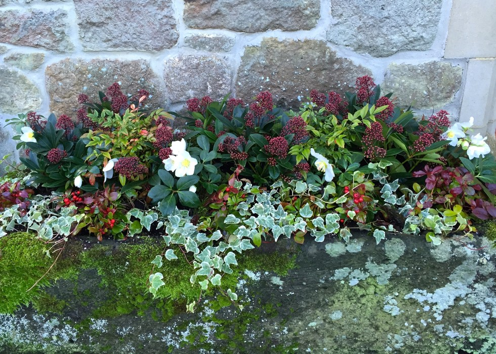 planting containers winter