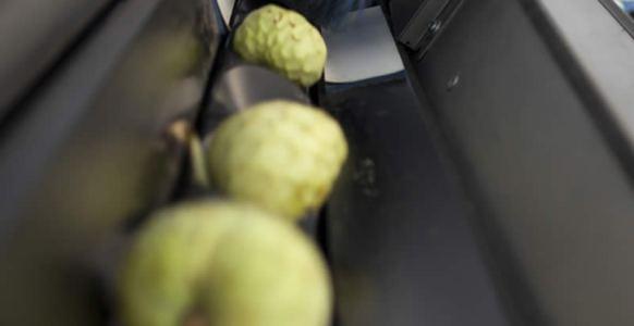 Instalaciones. Frutas Los Cursos