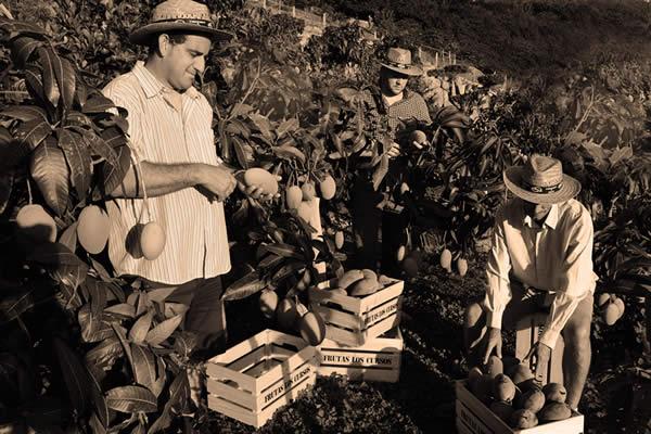Referentes en frutas subtropicales