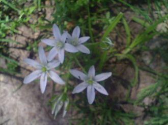 My Backyard May 25