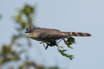 The flight opath was relatively clear except for this pass through a tree. Thankfully the autofocus behaved.