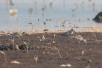 Mandai Mudflats