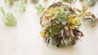 10 Easy Succulent Craft Projects