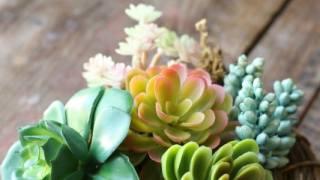 Sweet Spring Succulent Nest