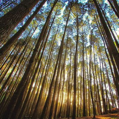 Jalan Menuju Hutan Pinus Imogiri Bantul Jogjakarta