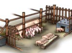 Lactating sows Pigsty Building