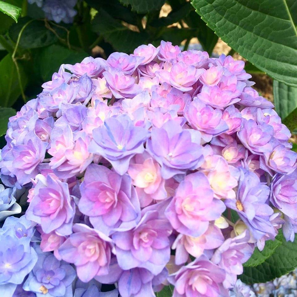 美しい花の畫像: 無料印刷可能七月 花