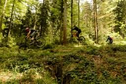 PhoToday geht in den Wald