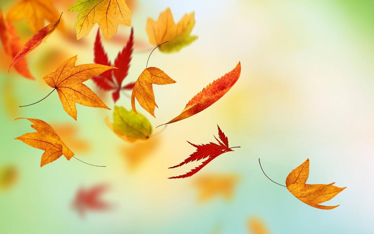 Galaxy S5 Fall Wallpaper Free Wallpapers Galaxy S6 Wallpapers Inspired By