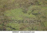 Stock Photography of Algae carpet k0066521 - Search Stock ...