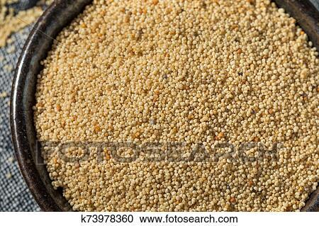 Raw Organic White Poppy Seeds Stock Image   k73978360   Fotosearch