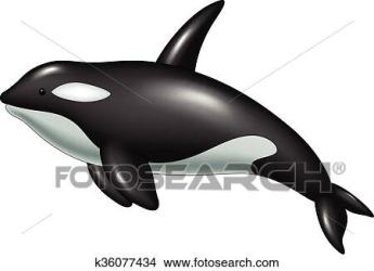 whale killer isolated clipart fotosearch vector clip