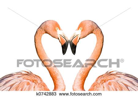 two pink flamingos drawing