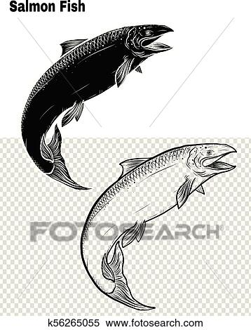 Salmon art highly detailed in line art style. Fish vector