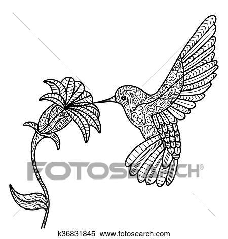 Ausmalbilder Für Erwachsene Kolibri Batavusprorace