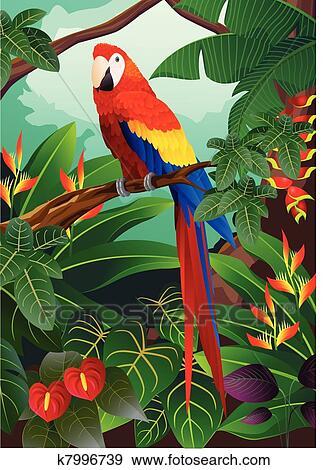 金剛鸚鵡, 鳥 美工圖案 | k7996739 | Fotosearch