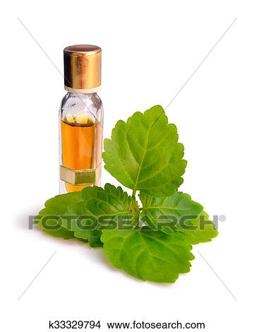 Patchouli sprig with essential oil. Picture | k33329794 | Fotosearch