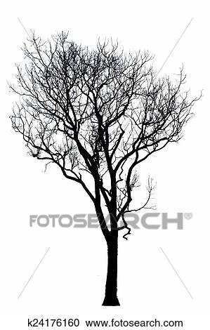 Stock Illustrations of Dead tree silhouette. dry oak crown
