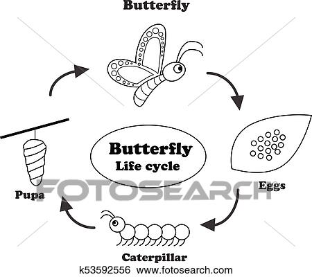 Clip Art of Butterfly life cycle in outline style, vector
