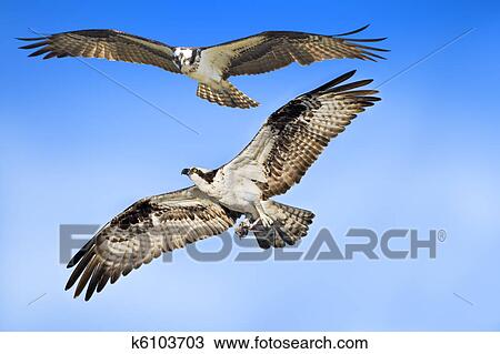 Stock Photo of florida birds k6103703 Search Stock