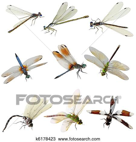 stock of damselfly and dragonfly