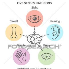 Five Senses Diagram Sony Xplod Mex Bt2900 Wiring Clipart Of Line Icons K35825224 Search Clip Art Human Ear And Eye Symbols Nose Mouth Outline Vector Signs