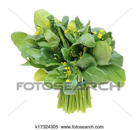 A bunch of chinese spinach Stock Photography | k17324305 | Fotosearch