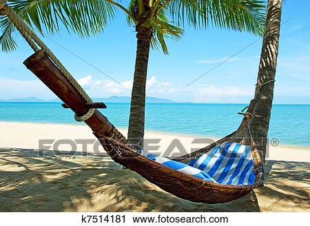 empty hammock between palms