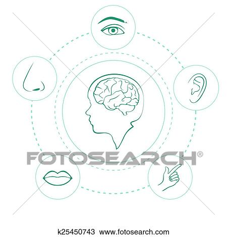 five senses diagram crossover wiring clipart of vector icons k25450743 search clip art human nose ear eye and mouth illustration